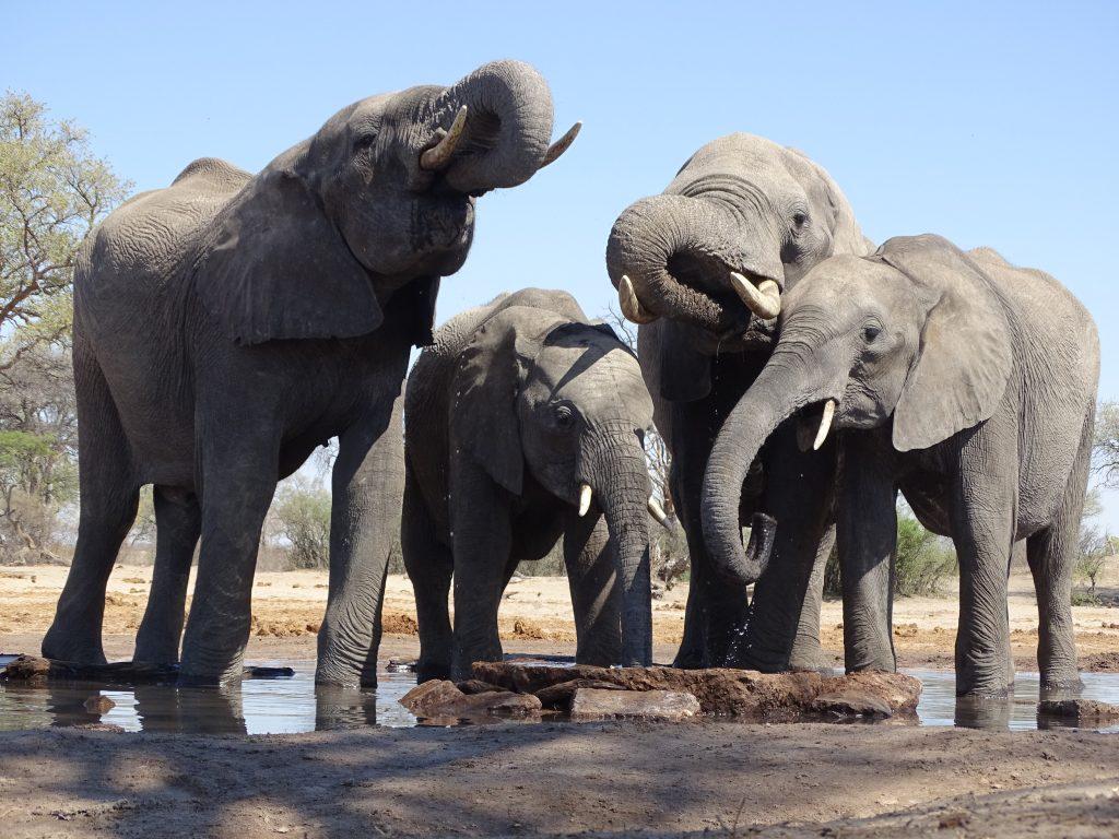 elephants for kids children facts